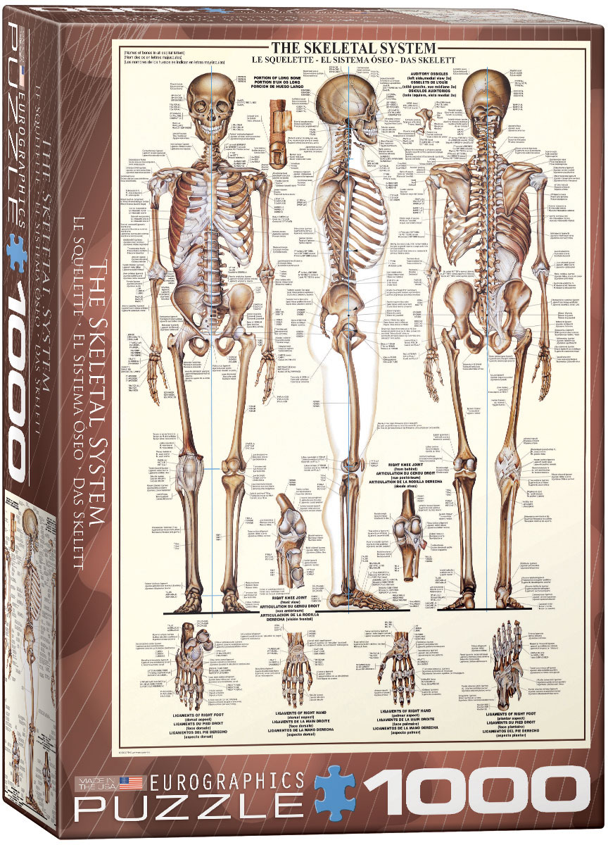 Skeletal System Jigsaw Puzzles at Eurographics